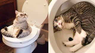 Try Not To Laugh Watching Funny Animals Compilation  Funniest Animals Vines 2020