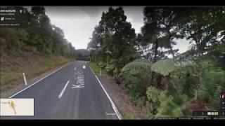Te Kauri Park Loop walk
