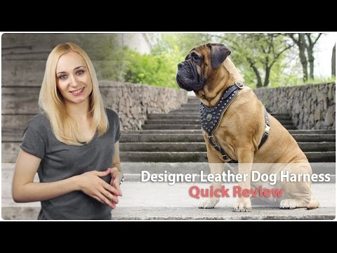 Designer Leather Dog Harness For Walking And Training - Review