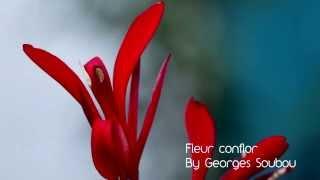 preview picture of video 'Fleur de conflor'
