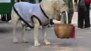 คุณโจ สุนัขแสนรู้ วัดป่าบ้านค้อ - dooclip.me