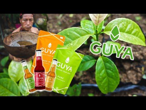 Dieses Video zeigt euch wer hinter GUYA steckt. Was ist Guayusa, Wo kommt es her und was für eine Wirkung hat Guayusa?
