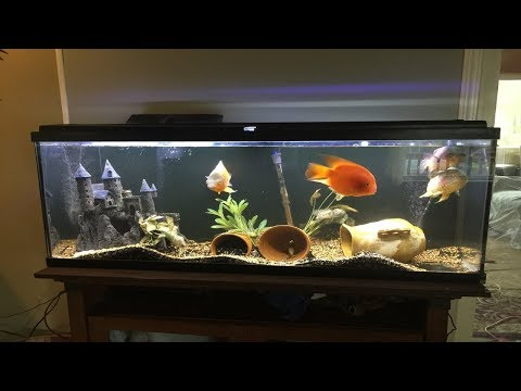 REVIEW on NICREW ClassicLED Aquarium Light