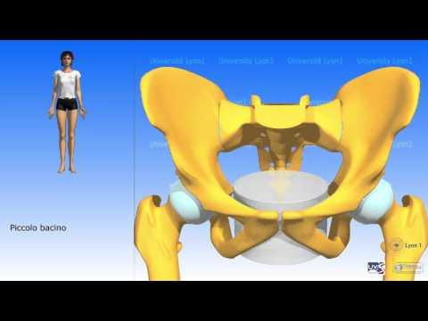 Esercizio per il trattamento della malattia degenerativa del disco del collo dellutero