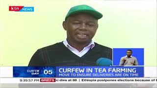 Curfew in Tea Farming: Curfew effects on Agriculture