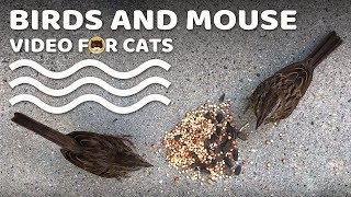Videos for Cats - Birds and Mouse!
