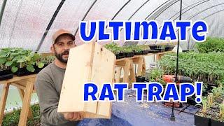 No More Rats!  Easy Homemade Rat Trap
