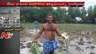 Fish Rains In Guntur And Krishna Districts | Special Focus | Part 2 | NTV