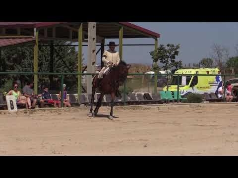 Equitación de Trabajo 280821 Video Doma 1