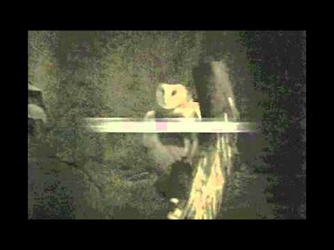 Misteri Menjelang Malam- Kisah Paling Seram