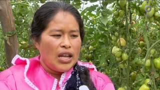 Diálogos en confianza (Sociedad) - Mujer rural, alimentación y pobreza