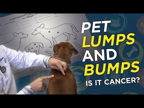 , title : 'Is it Cancer? Pet Lumps & Bumps  - VetVid Episode 023