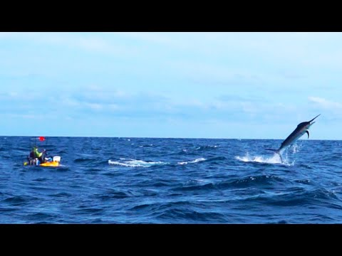 500-Pound Marlin Tows Kayak Fisherman 15 Miles Out to Sea | Panama | Field Trips with Robert Field