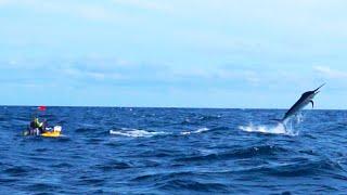 500-Pound Marlin Tows Kayak Fisherman 15 Miles Out to Sea | #FieldTrips Panama