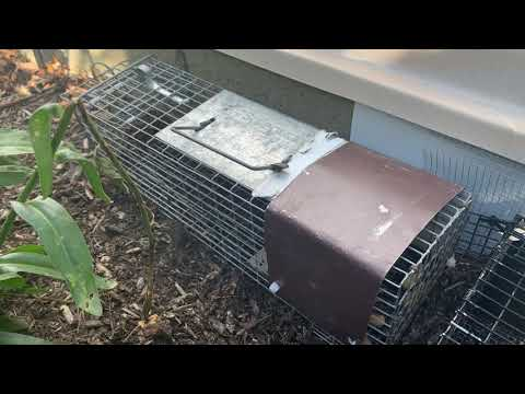 Squirrels Infiltrating the Crawl Space in Metuchen, NJ