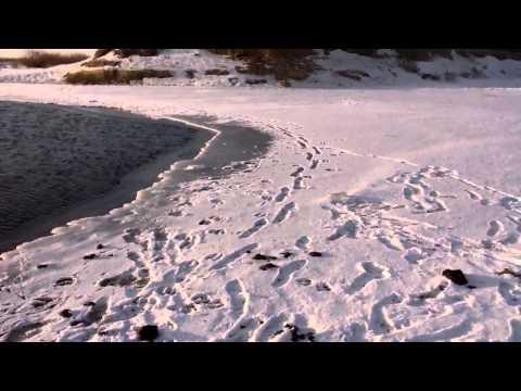 Река голодная Илекский район