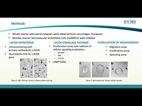 Thumbnail image of video presentation for LHCGR Mediates Angiogenic Signaling in Ovarian Microvascular Endothelial Cells