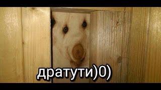 ПОДБОРКА ПРИКОЛЬНЫХ ВИДЕО С INSTAGRAM!
