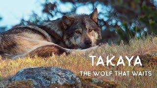 Takaya: The Wolf That Waits