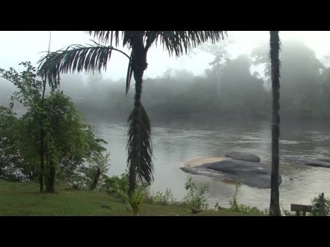 Surinam. Pingpe & jungle, Back-to-Basic? *** trailer ***