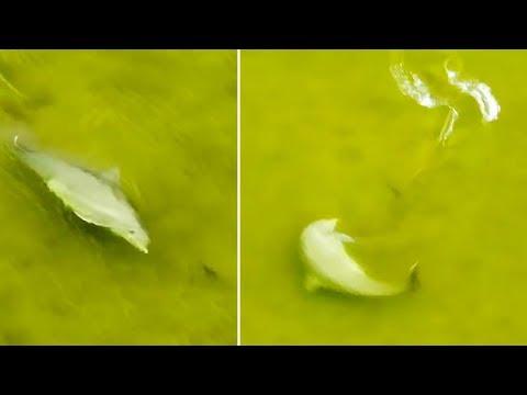 Delfín vs. ryba - Ozzy Man