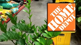 All The Houseplants At Home Depot   Beginners Tour