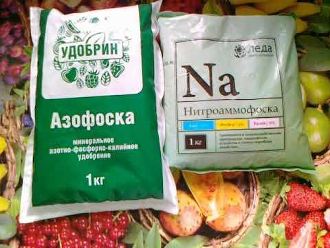 Азофоска или Нитроаммофоска. Основа для питания ваших растений.
