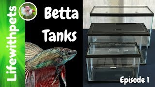 Choosing a Betta Fish Tank (Episode 1)