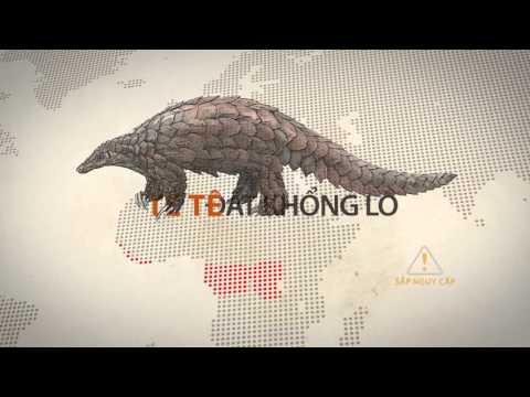 Infographic: Thông tin cơ bản về loài tê tê