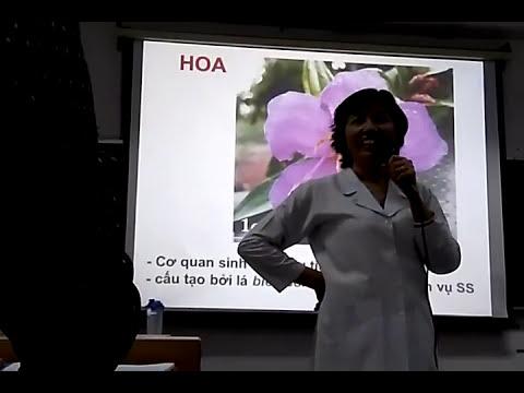 Bài giảng Thực Vật Dược - Hoa - PGS.TS Trương Thị Đẹp