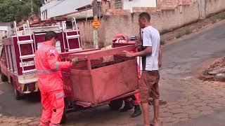 Duas capivaras foram capturadas no centro de Patos de Minas.