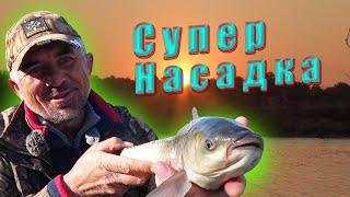 Наживка для рыбы во время рыбалки