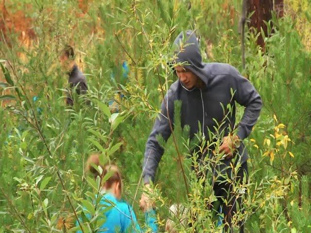 Волонтеры обыскивают ангарские леса