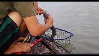 Giăng câu cá trên sông lớn