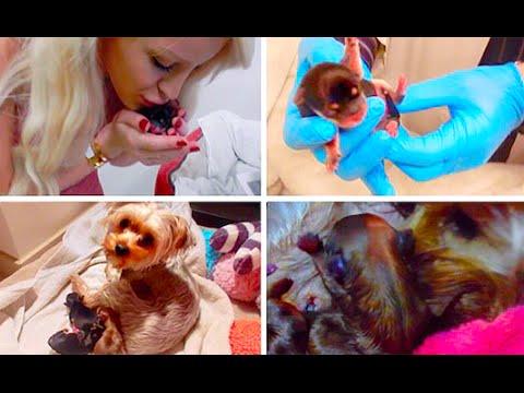 MY DOG GIVING BIRTH! (GRAPHIC)   Gigi