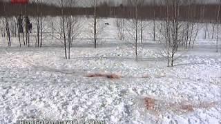 В деревню Рушиново Новгородского района пришли волки