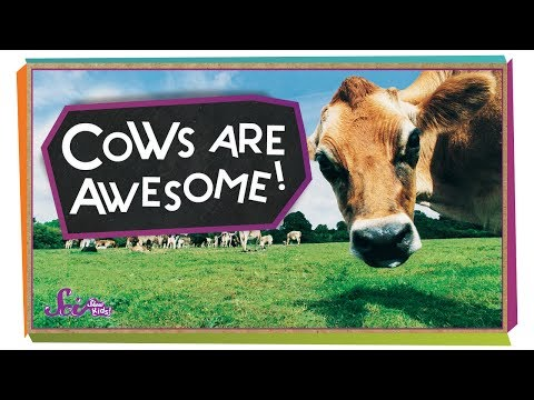 , title : '4 Reasons Cows are Awesome! | Animal Science for Kids
