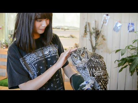 しあわせをよぶフクロウカフェ Country Owl