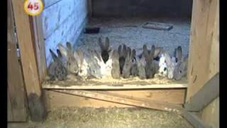 1215 кролики