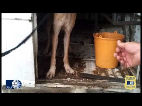 Medicine da helminths per un cucciolo