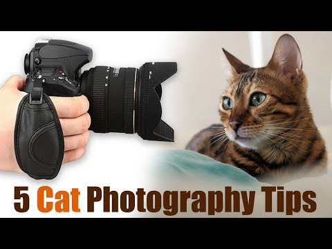 5 Amazing Cat Photography Tips for Incredible Photos
