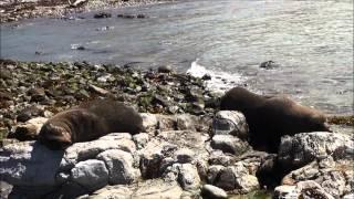 New Zealands Dyr på Østkysten Af Sydøen