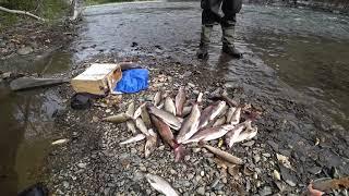 Рыбалка на черного хариуса в казахстане