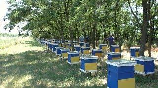 Пчеловоды профессионалы делятся опытом . Пасека семьи Ничик