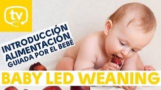 El Baby Led Weaning: Alimentación Complementaria Guiada Por El Bebé