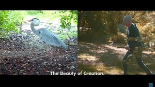 """St. Lenox – """"The Great Blue Heron (Song of Solomon)"""""""