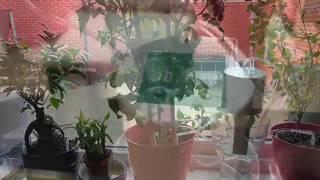 Автополив комнатных растений Easy Grow от компании РИАЛ - видео