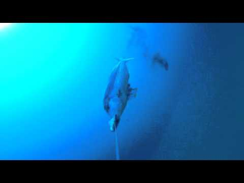La pesca su Ob 2015 video