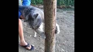 animale pisica stie ce vrea