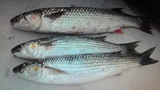 Зеленка наживка для рыбалки фото